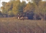Tule Elk tour route