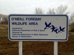 O'Neil Forebay WLA