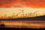 California rules and regulations for hunting ducks, geese, scaup, brant, Canada geese, dark geese, snow geese, white-fronted geese, specklebellies, white geese, and migratory game birds on national wildlife refuges, California wildlife areas, and California ecological reserves